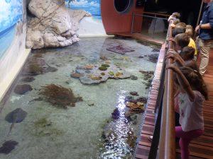 Les enfants regardent les poissons et les raies dans le pavillon tropical.